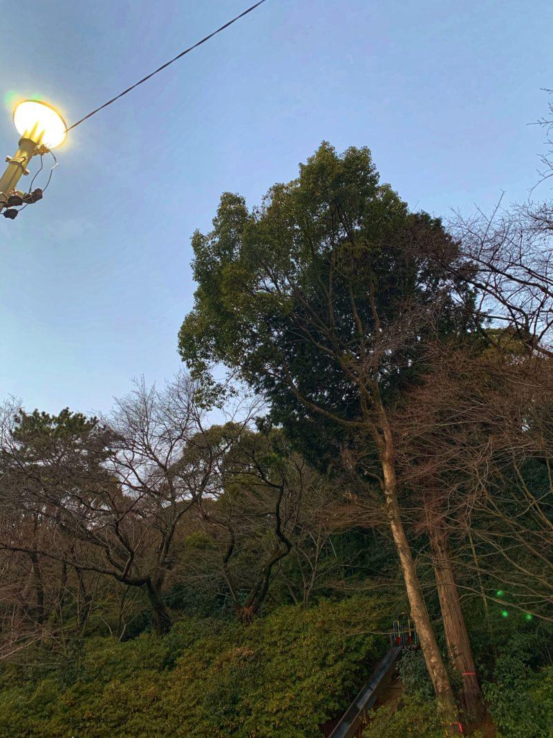 夕方の空と木