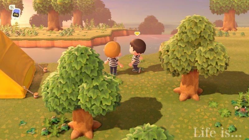 どうぶつ の 森 ふたり で 遊ぶ